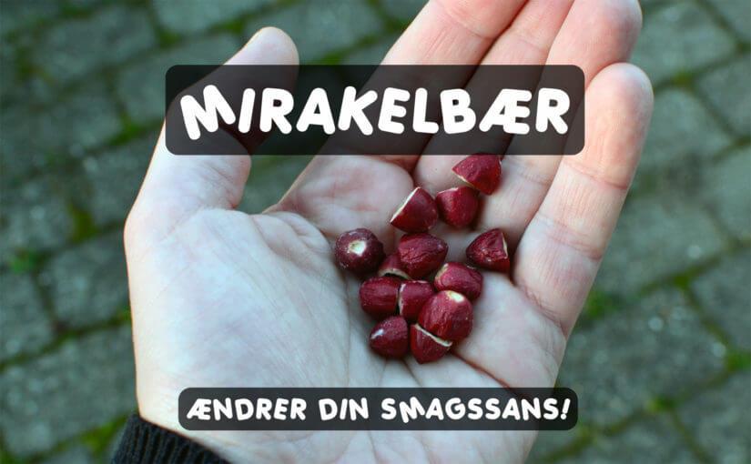 🍓 Mirakelbær / mirakelfrugt – Et bær, der ændrer din smagssans totalt!